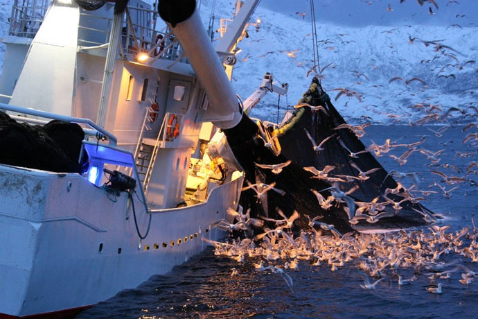 Certification Sustainable Fishing